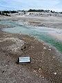 Bacteria Mat, Norris Geyser Basin in Yellowstone DyeClan.com - panoramio.jpg
