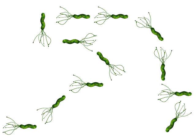 Bacteria random walk