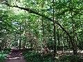 Balade en Forêt de Verrières le 20 août 2017 - 038.jpg
