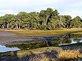 Balblair Bay - at low tide - geograph.org.uk - 624669.jpg