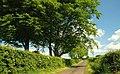 Ballynoe Lane near Antrim - geograph.org.uk - 824463.jpg