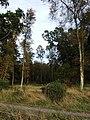 Balmuir Wood - geograph.org.uk - 584643.jpg