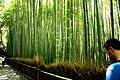 Bamboo grove, Arashiyama (3811218708).jpg