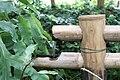 Bambouseraie de Prafrance 20100904 110.jpg
