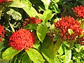 Baramati, Maharashtra, India. 26 Flowers.jpg