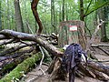 Barrier in the Hambach forest 14.jpg