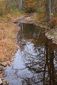 Beaver Run looking downstream near its mouth.JPG
