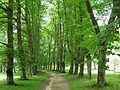 Bebrenes parks.JPG