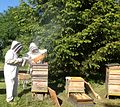 Bee keeping at Primrose Cottage, Little OAKLEY, Northants..jpg