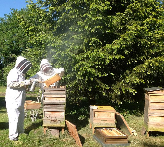 File:Bee keeping at Primrose Cottage, Little OAKLEY, Northants..jpg