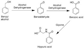 Benzyl Alcohol Metabolism Scheme.png