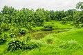 Bhiwali Near Ganeshpuri,Vasai, Maharashtra - panoramio (29).jpg