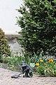 Binio (Binio) Wroclaw dwarf 2020 P01.jpg