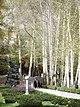 Birches, Sa'ad Abad Palace, Tehran, Iran (14473686382).jpg