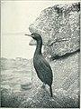 Bird notes (1913) (14563424188).jpg