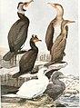 Birds of America; (1923) (20196444778).jpg