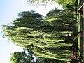 Bistrita - Parcul Central (819420036).jpg