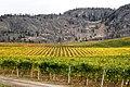 Black Sage Vineyard - panoramio.jpg