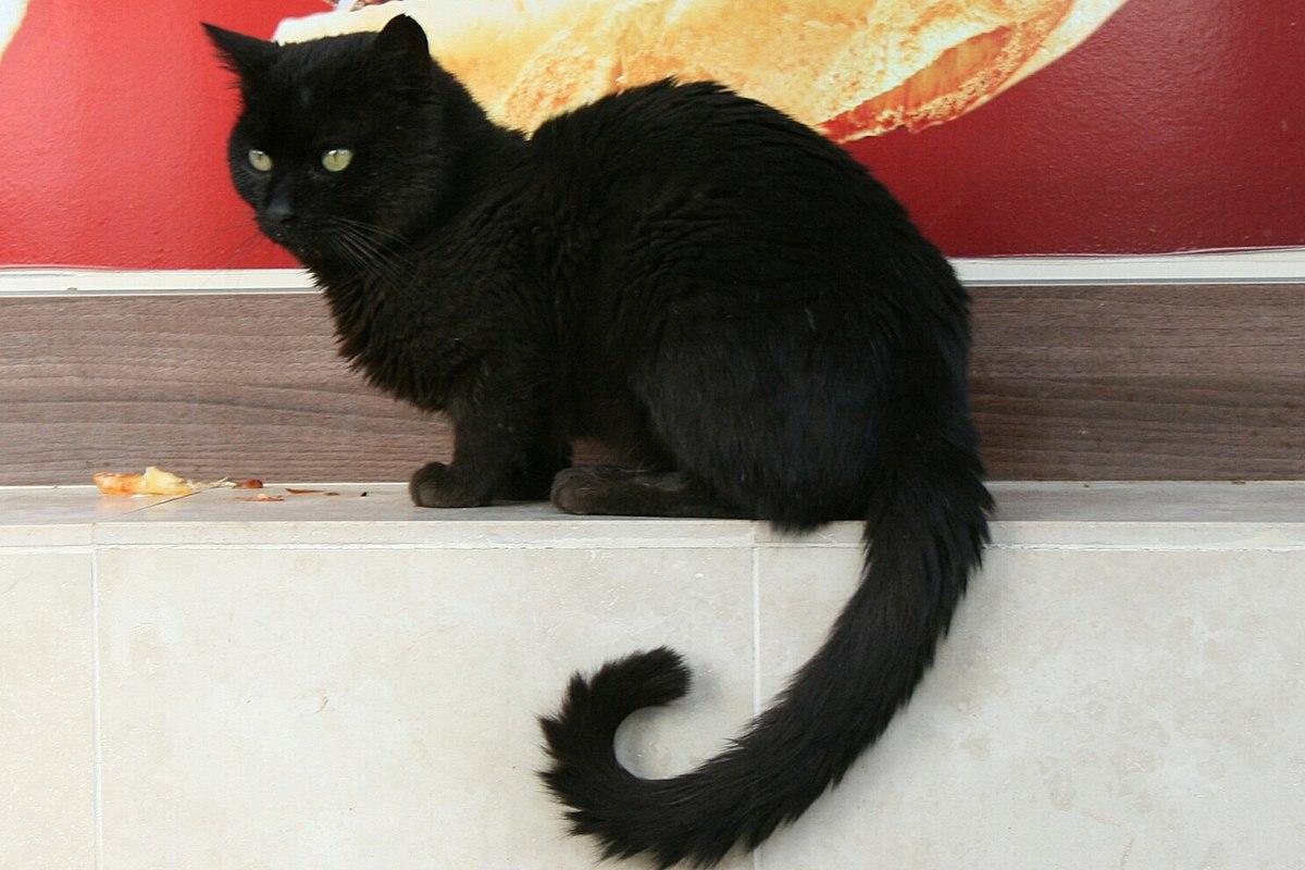 Black Cat Data