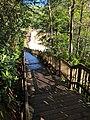 Blackwater Falls of Blackwater Falls State Park 16.jpg