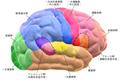 Blausen 0102 Brain Motor&Sensory (flipped) (ja).png