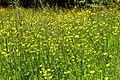 Bloemrijk grasland 02.JPG