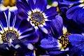 Blue Flower (247981325).jpeg