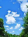 Blue sky in Angrignon park - panoramio.jpg