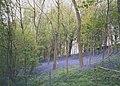 Bluebell wood - geograph.org.uk - 194186.jpg