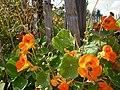 Blumen am Gartenzaun – Arboretum Ellerhoop 1.jpg