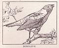 Bobolink Page 331.jpg