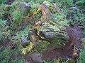 Bog-wood Eglinton.JPG