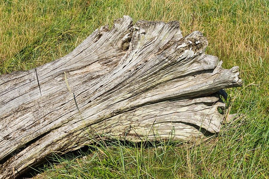 Driftwood, Îles aux Moines, Morbihan, France.