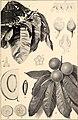 Boletim do Museu Paraense de Historia Natural e Ethnographia (Museu Goeldi) (1902) (20200378469).jpg