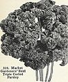 Bolgiano's capitol city seeds - 1963 (1963) (20364255916).jpg