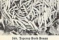 Bolgiano's spring 1965 catalog (1965) (20382552882).jpg