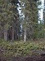 Bonanza Creek Water Quality Testing, Yukon-Charley Rivers, 2003 (72e0a6d6-d71f-4577-bd9b-1736d94b91a9).jpg