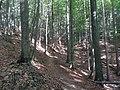 Bosc a Eslovènia (agost 2013) - panoramio.jpg