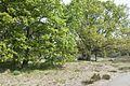 Boshoverheide - Weert - 20536841 - RCE.jpg