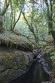 Bosque - Bertamirans - Rio Sar - 041.jpg