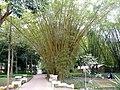 Botanic garden Rio de Janeiro.jpg
