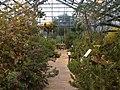 Botanischer Garten Düsseldorf - Südafrika 1.jpg