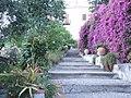 Bougainvillea-Hotel San Domenico-Taormina-Sicilia-Italy-Castielli CC0 HQ - panoramio - gnuckx (3).jpg