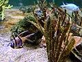 Boulogne sur mer.- Nausicaà (aquariums) (6).jpg