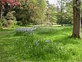 Bournemouth Upper Gardens, spring flowers - geograph.org.uk - 1292399.jpg