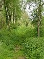 Brackagh Moss - geograph.org.uk - 1327979.jpg
