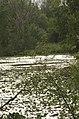 Bras mort de la Garonne 6.jpg
