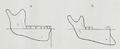 Braus 1921 359.png