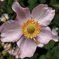 Breda - Roze bloem.jpg