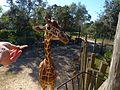 Brevard Zoo - Flickr - Rusty Clark (93).jpg